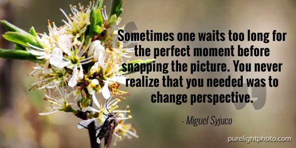 """""""Sometimes one waits too long for the perfect moment before snapping the picture. You never realize that you needed was to change perspective."""" - Miguel Syjuco"""